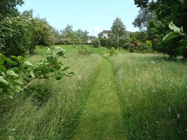 Wild_flower_garden_-_geograph.org.uk_-_855625