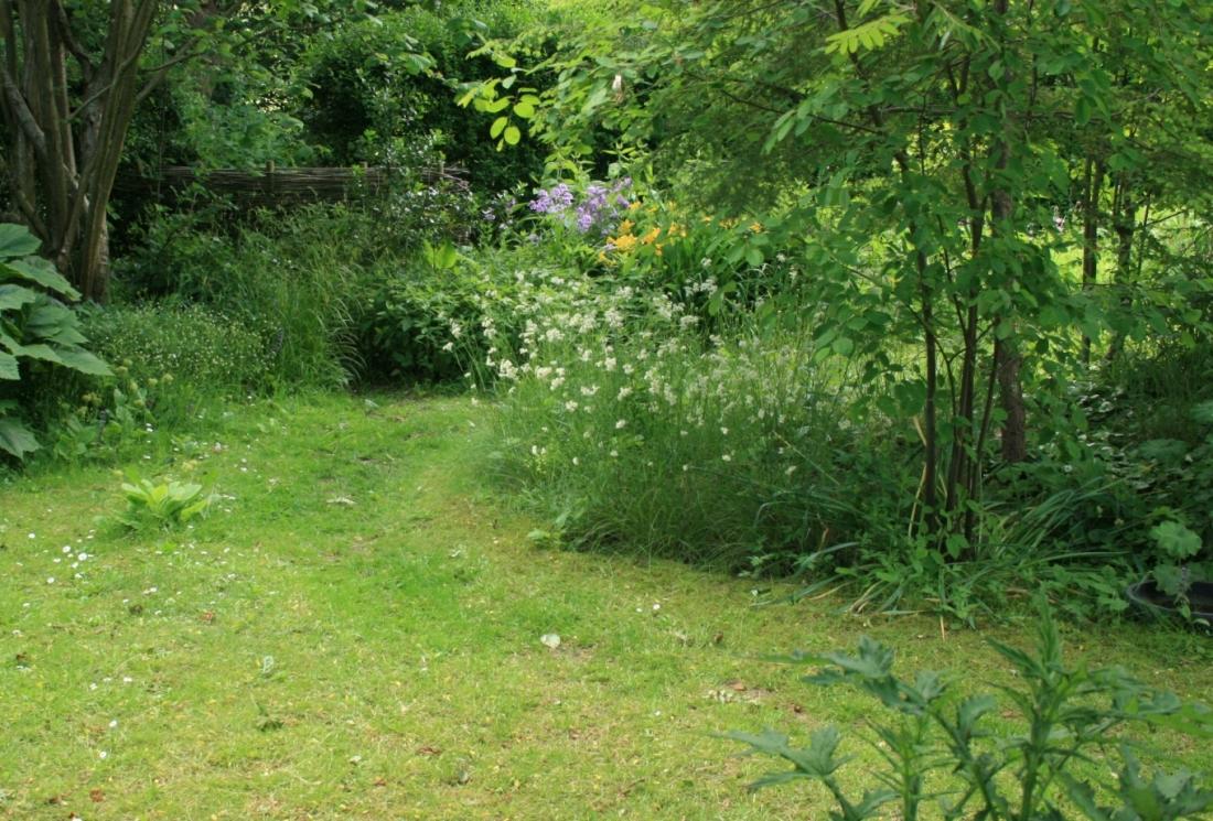 Wild_garden1