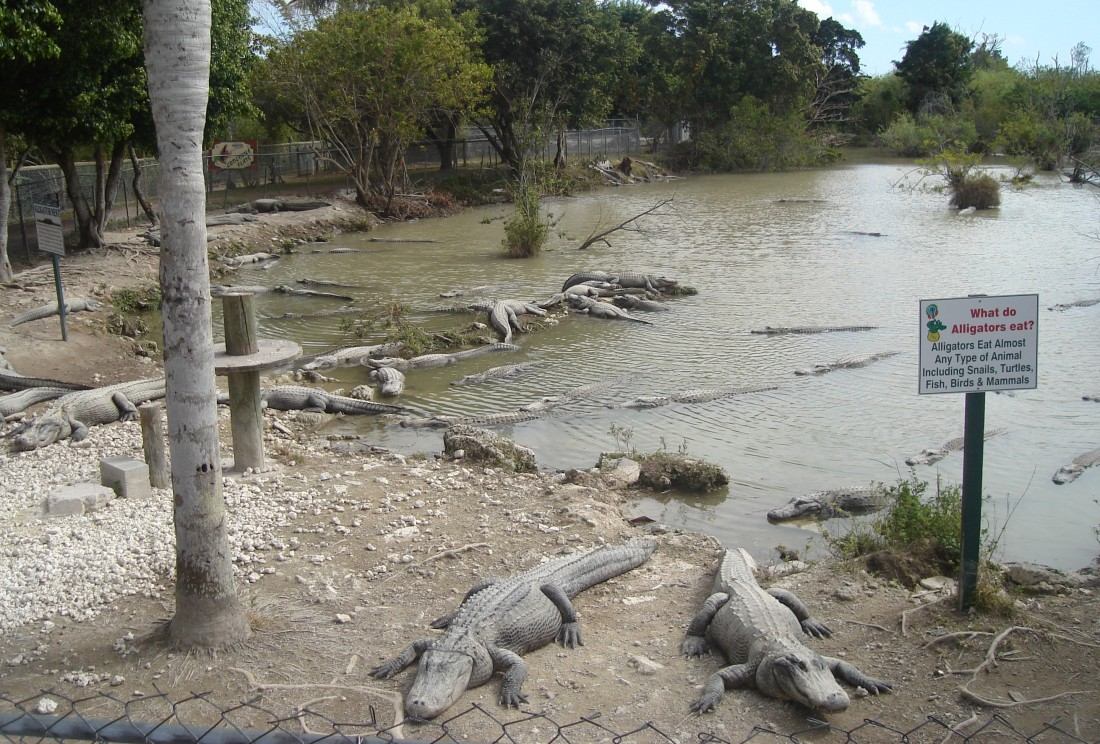 Everglades_Alligator_Farm_Denizens2